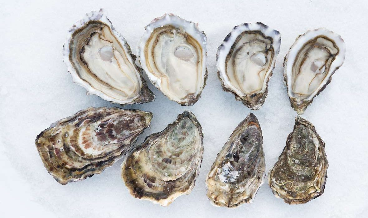 Andrew Kelly's Oyster